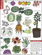 February produce